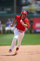 Springfield Cardinals third baseman Paul DeJong (12) running the bases during a game against the Northwest Arkansas Naturals on April 27, 2016 at Hammons Field in Springfield, Missouri.  Springfield defeated Northwest Arkansas 8-1.  (Mike Janes/Four Seam Images)