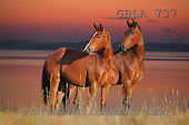 Bob, ANIMALS, horses, collage, photos, 2 horses, sunset(GBLA737,#A#)