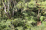 French Polynesia Tahiti Mahina ferns vegetation