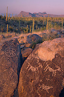 Petroglyphs on Signal Hill and saguaro cactus<br />