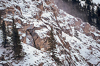 Mountain Goat billy (Oreamnos americanus) on snow covered mountainside in Northern Rockies, late fall/early winter.