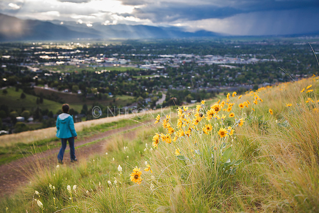 hiking on mount sentinel in spring in missoula, montana with arrow leaf balsamroot flowers along the trail