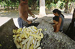 A family living in a village on the banks of the Tapajos river producing farinha, an Amazonian staple used as a food garnish and made from manioc, a root crop found locally. Once the farinha had been made, it was taken to nearby towns in 50kg sacks to be sold. Villagers along the river lived from fruit and vegetables harvested from the rainforest but suffered the effects of deforestation as the rainforest was cleared by illegal logging and burning for cattle ranching and growing soy beans for export.