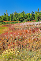Fireweed (Epilobium sp.)<br />  Yellowknife Highway<br /> Northwest Territories<br /> Canada