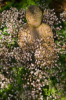 Small statue of Buddha surrounded by London Pride (Saxifraga x urbium)flowers.??Date Taken: 15/06/10??Location: Lynne Green's garden, The White House, Liversedge, Yorks???Commissioned by: Paul