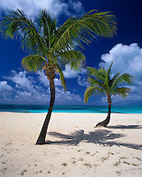 Barbuda, West Indies<br /> Palm trees on a deserted section of Coco Point Beach - Caribbean Leeward Islands