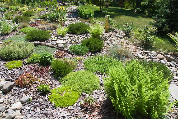 Rock Garden Plants Plant Flower Stock Photography