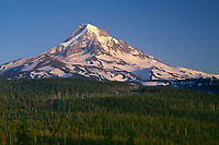 ORCAN_032 - USA, Oregon, Mount Hood National Forest, Evening light on north side of Mount Hood and conifer forest.