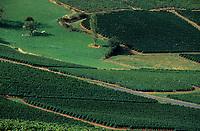 Europe/France/Rhône-Alpes/69/Rhône/Env Oingt: Le vignoble du Beaujolais