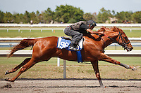 #96Fasig-Tipton Florida Sale,Under Tack Show. Palm Meadows Florida 03-23-2012 Arron Haggart/Eclipse Sportswire.