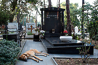 A dog sleeps at the graveside of former Bosnian Serb general Ratko Mladic's daughter Ana at the Topcider cemetary, she committed suicide in 1994, at the height of the war in Bosnia. Mladic is one of the most sought after suspects from the Bosnia conflict. He has been indicted by the UN war crimes tribunal on charges of genocide and crimes against humanity..