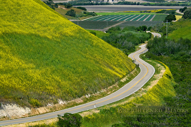 Country road curves through green hills and agriculture valley is Spring, near Lompoc, Santa Barbara County, California