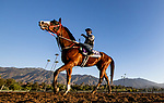 OCT 28: Breeders' Cup Dirt Mile entrant Blue Chipper, trained by Kim Young Kwan, with Flavien Prat up at Santa Anita Park in Arcadia, California on Oct 28, 2019. Evers/Eclipse Sportswire/Breeders' Cup
