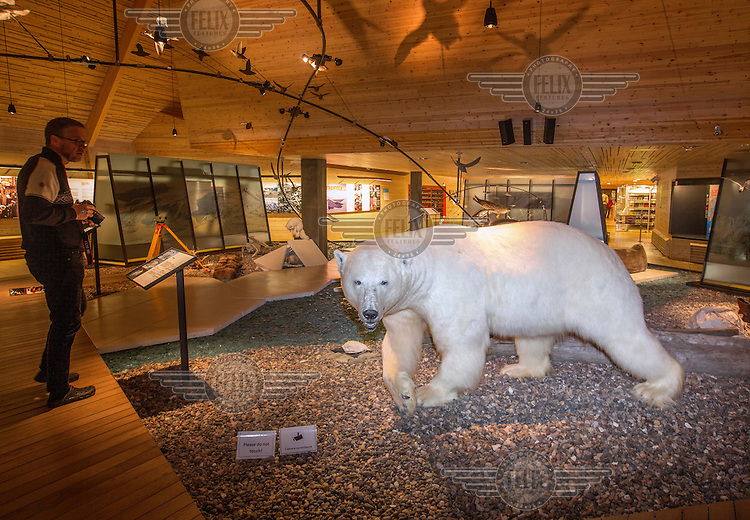 A polar bear on exhibition in the Svalbard Museum in the town of Longyear.  <br /> <br /> Norway's polar bear population lives in and around Svalbard. Any global warming will affect the around 3000 polar bears in the area. <br /> <br /> <br /> Svalbard (formerly known by its Dutch name Spitsbergen) is a Norwegian archipelago in the Arctic Ocean. Situated north of mainland Europe, it is about midway between continental Norway and the North Pole. <br /> <br /> <br /> (photo: Fredrik Naumann/Felix Features)