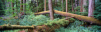 Vancouver Island Panoramic Photos