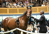 HIP 006, by Bernardini out of Mountain Mambo, $750,000.