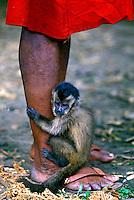 Animais. Mamiferos. Primatas. Macaco dos índios Kaipós, PA. Foto de Ricardo Azoury.