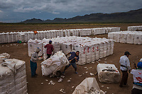 LA ESCUADRA, CHIHUAHUA, MEXICO - OCTOBER 17: Mexican workers tend to cotton bails during harvest on a farm owned by Mennonites on the 17th of October, 2015 near La Escuadra, in Chihuahua state, Mexico. <br /> <br /> Daniel Berehulak for The New York Times