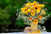 Carl, FLOWERS, photos, SWLA12038,#f# Blumen, Natur, flores, naturaleza