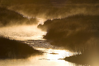 The Madison River warmed by the geothermal features of the park, steams on a cold morning in sunrise light, Yellowstone NP