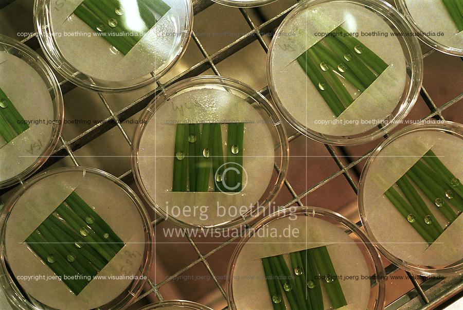 GERMANY Hamburg, biotechnology , GMO crop research at botanical  institut / DEUTSCHLAND Hamburg, genetisch veränderte Pilzkulturen auf Kulturpflanzen in der Klimakammer am Institut für allgemeine Botanik