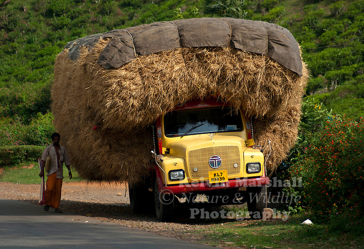 An overloaded Indian farmers truck carrying hay to the markets. Malabar coast (Kerala) - Southern India.