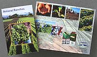 Amaral Ranches Brochure