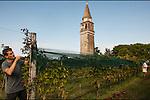 Venezia - Mazzorbo. Tenuta Venissa. Matteo Bisol vendemmia la Dorona.<br /> Venice - Mazzorbo, Tenuta Venissa. Matteo Bisol during the grape hearvest.