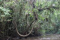 Swamp forest; Sarawak, Malaysia; Borneo; Bintulu area