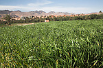 Irrigated farm land, Tinerhir, Morocco, north Africa