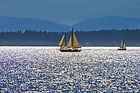 Yachts sailing on Puget Sound between Seattle, Washington State, USA, and Victoria, British Columbia, Canada, with the Olympic Mountains in the background. 200809061005..Copyright Image from Victor Patterson, 54 Dorchester Park, Belfast, N Ireland, BT9 6RJ...Tel: +44 28 9066 1296.Mob: +44 7802 353836.Email: victorpatterson@mac.com..IMPORTANT: Go to www.victorpatterson.com and click on Terms & Conditions