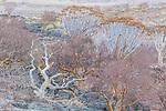 Namibia, Namib-Naukluft National Park,