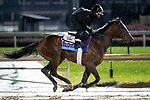 November 1, 2018: Signalman, trained by Kenneth G. McPeek, exercises in preparation for the Breeders' Cup Juvenile at Churchill Downs on November 1, 2018 in Louisville, Kentucky. Alex Evers/Eclipse Sportswire/CSM