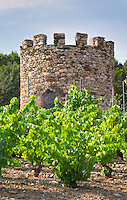 Domaine la Tour Vieille. Collioure. Roussillon. Vines trained in Gobelet pruning. Vine leaves. Old, gnarled and twisting vine. France. Europe. Vineyard.