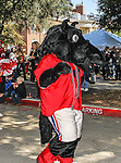 Southern Methodist Mustangs mascot, Peruna, joins in the homecoming celebration before the game between the Memphis Tigers and the Southern Methodist Mustangs at the Gerald J. Ford Stadium in Dallas, Texas. SMU defeats Memphis 44 to 13.