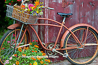 63821-22219 Old bicycle with flower basket next to old outhouse garden shed.  Red Wing Begonias, Zinnias, Snapdragons  (Antirrhinum sp.)  Marion Co., IL