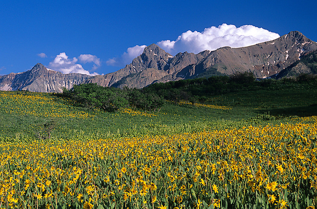 Mules Ears, Sneffels Mountain Range, Colorado