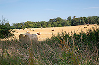 Round barley bales - Norfolk, July