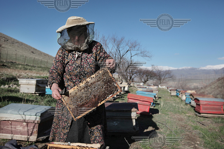 75 year old beekeeper Sofik Nikolayn checks a frame from one of her hives in the mountains of Vyats Dzor. Sofik used to rent her hives but since Oxfam donated ten to her she has been able to expand her business and now has over eighty hives.