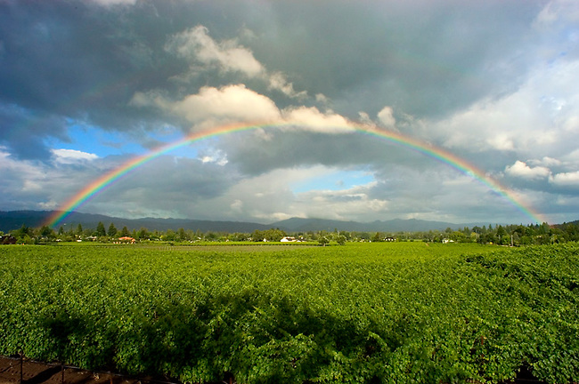 Rainbow over Napa Valley vineyard
