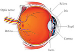 Normal Anatomy of the Eye. Labels for optic nerve, sclera, iris, pupil, cornea, lens and retina.