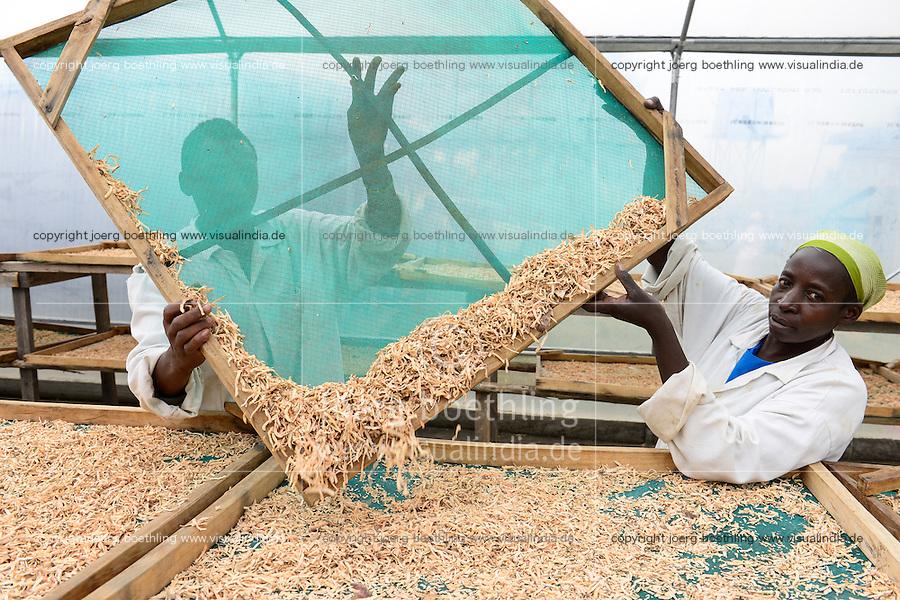 KENYA, County Bungoma, village Kimwanga, sweet potato processing, drying unit, the chips will be later processed to flour for baking / KENIA, Suesskartoffel Verabeitung bei NGO CREADIS, Trocknung der Raspeln die spaeter zu Mehl zum Backen verarbeitet werden
