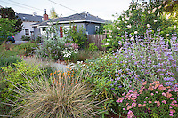 Urban front garden with hellstrip and yard planted with California native plants, Heath-Delaney garden