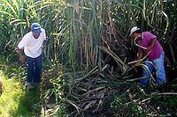 Cañaverales en  Republica Dominicana.Ciudad: Santo Domingo.Fotos:  Carmen Suárez/acento.com.do.Fecha: 07/06/2011.