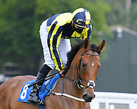 Willy Nilly ridden by Hector Crouch goes down to the start  of The Swallowcliffe Handicap (Div 2) during Horse Racing at Salisbury Racecourse on 13th August 2020