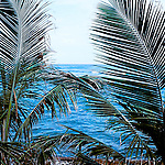 two palm branches over looking the caribbean sea