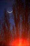 A small crescent moon rested in between some trees as a red flare from a streetlight reflected upward in Sausalito, California.