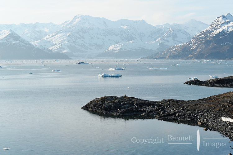 Icebergs float in Columbia Bay , Prince William Sound, Southcentral Alaska on a sunny spring evening in early May.