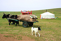 Nomads move around the steppes of Mongolia depending on the season, water availability and whether or not they like their neighbors.  Nomadic people move from one place to another, rather than settling permanently in one location. Nomads in Mongolia are usually of the pastoral type following seasonally available wild plants and game, moving with them in ways that avoid depleting pastures beyond their ability to recover.