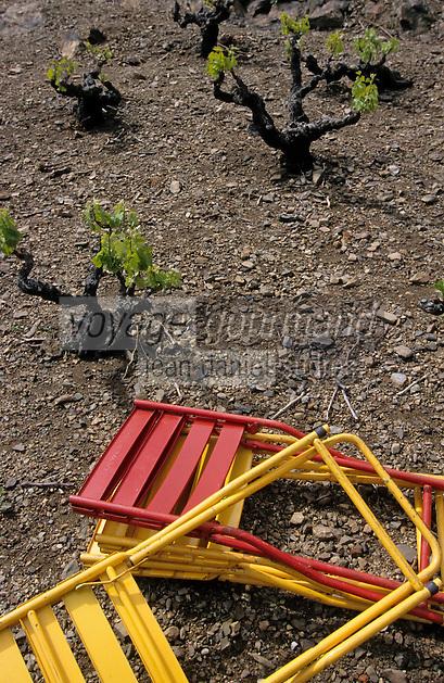 """Europe/France/Languedoc-Roussillon/66/Pyrénées-Orientales/Banyuls-sur-Mer: chaises """"sang et or"""", les couleurs de la Catalogne, dans les vignes lors d'une """"Cargolade"""""""